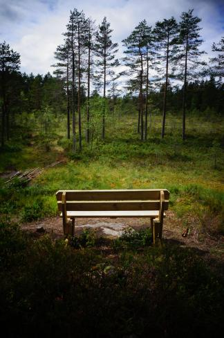 bench-in-woods